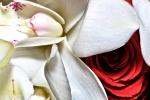 Photo de mariage fleur